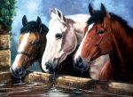Kifestő készlet akrilfestékkel, ecsettel, gyerekeknek 11 éves kortól - 30x40 cm - Három ló az itatónál
