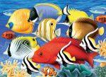 Kifestő készlet akrilfestékkel, ecsettel, gyerekeknek 11 éves kortól - 30x40 cm - Trópusi halak