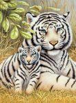 Kifestő készlet akrilfestékkel, ecsettel, gyerekeknek 8 éves kortól - 20x25 cm - Fehér tigrisek