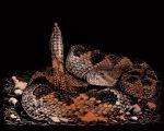 Képkarcoló készlet karctűvel - 25x20 cm - Réz - Csörgőkígyó