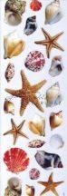 Dekupázs transzfer - Tengeri kagylók, csigák és csillagok